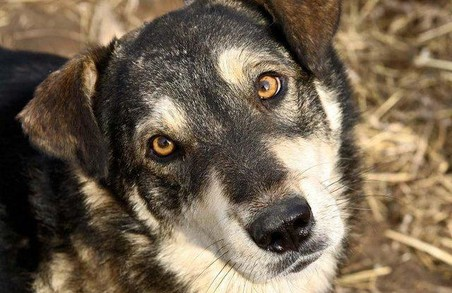 Собаки-безхатченки страждають через пастки браконьєрів