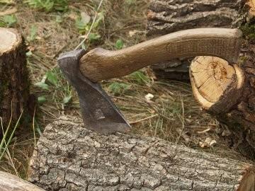 На Львівщині вирубали понад 1 000 дерев незаконним шляхом