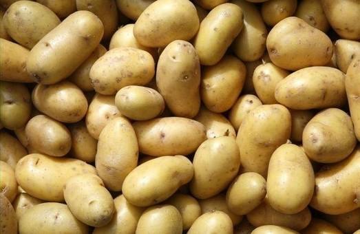 Експерт пояснив, чому на Львівщині подорожчала картопля