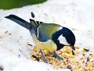 На Львівщині влаштували зимовий флешмоб, аби нагодувати птахів