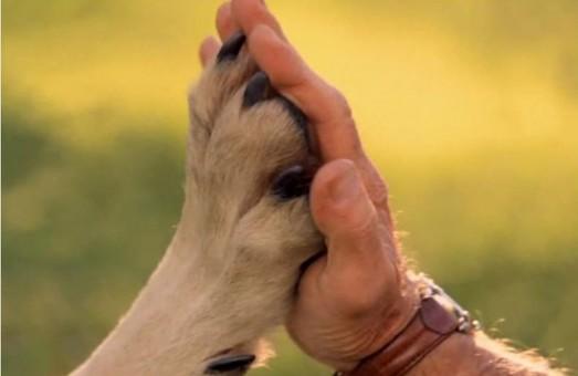 Львів'ян закликають прихистити тварин з притулку на час карантину