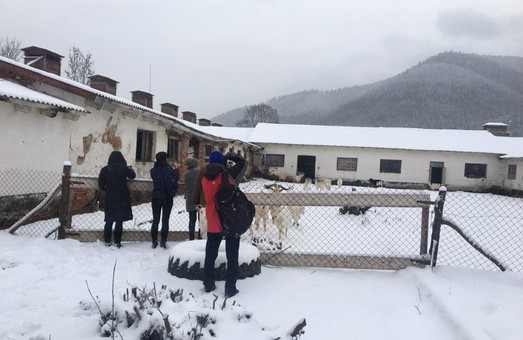 Переселенки з Донбасу налагодили у Тухлі виробництво такого козячого сиру, що французи у захваті