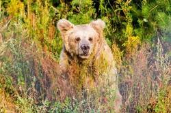 Сьогодні ведмедів на заправках більше, ніж у лісі, - Неля Марчук