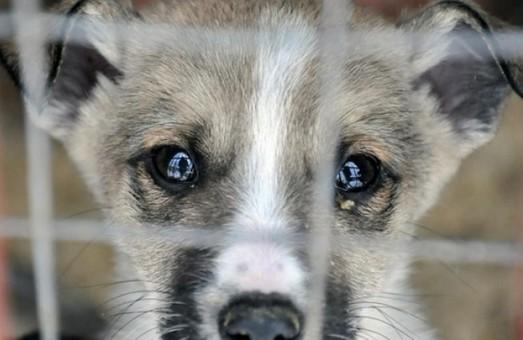 На Львівщині чоловіку, який жорстоко вбив сусідського собаку, загрожує 3 роки тюрми