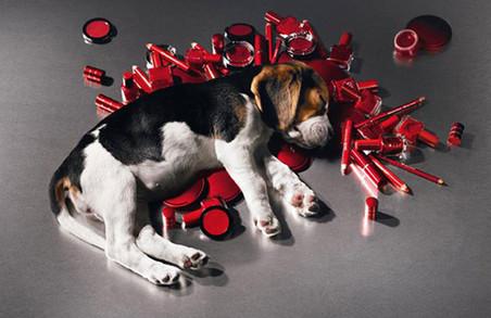 В Україні хочуть заборонити випробовувати косметику на тваринах