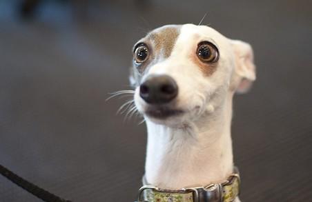 На Львівщині засудили чоловіка, який жорстоко вбив сусідського пса, що надокучав йому гавканням