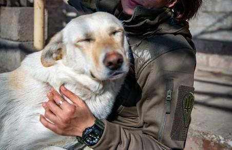 У Львові для собаки-героя з передової шукають родину