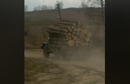 На Львівщині невідомі масово вирубують ліс