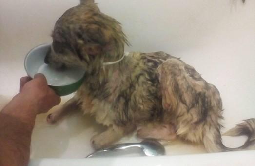 На Львівщині неадеквати відрубали собачці лапи