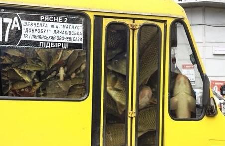 Не вгодили: жителі Рясного знову скаржаться на транспорт