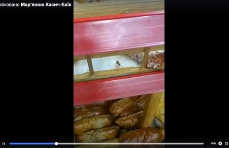 У львівських супермаркетах «Арсен» печуть випічку з тарганами: фото