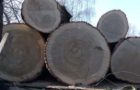 У Львові впіймали чорного дроворуба на вантажівці, нагруженій кругляком