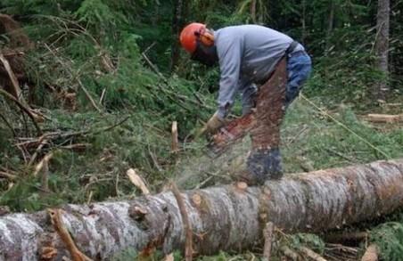 На Львівщині затримали чоловіка, який рубав дерева прямо у ландшафтному парку