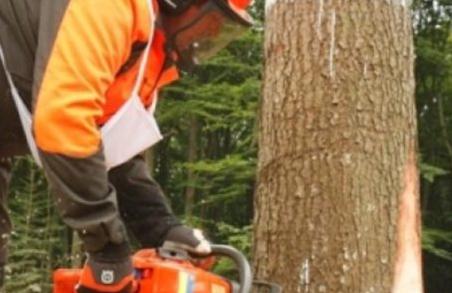 На Львівщині працівники лісгоспів півроку тримають без зарплати