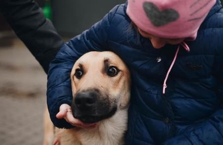 У Львові безкоштовно вакцинуватимуть тварин