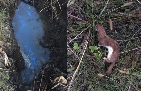 Біля Львова хімзавод продовжує скидати відходи