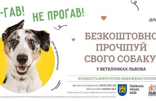 У Львові можна безкоштовно прочіпувати свою собаку: місця обмежені