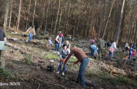 На Львівщині висадили 65000 дерев за 1 день