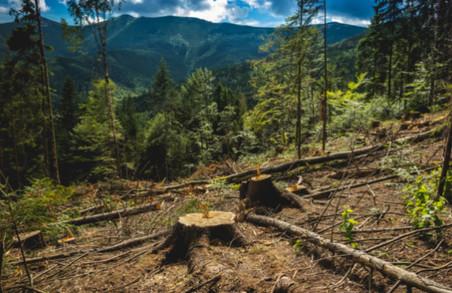 ВРУ заборонила вирубувати ліс у Карпатах