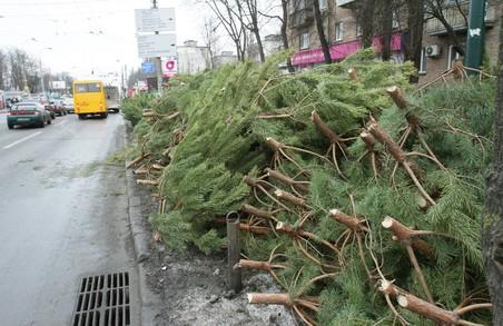 У Львові відкриваються ялинкові базари: де можна купити різдвяне дерево (адреса)