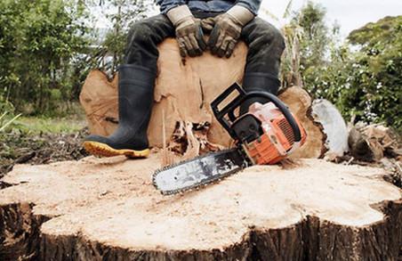 Біля Львова зловмисники вирубали ліс у майбутньому заповіднику