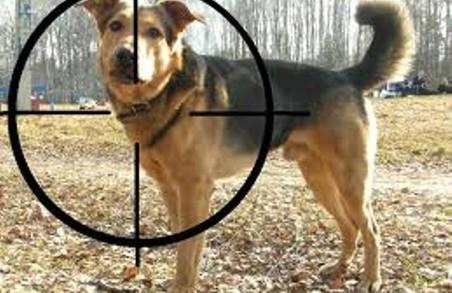 У Львові завелися догхантери: 3 собаки постраждало, 1 загинула