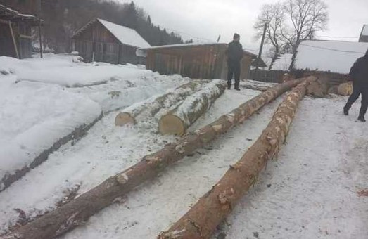 Завдяки посту в соцмережі львівські правоохоронці зупинили незаконну рубку дерев (ФОТО)