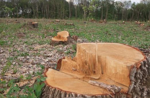 На Львівщині судитимуть двох лісників за вирубку лісу на суму близько 600 000 гривень