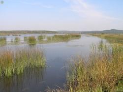 Яворівський національний природний парк на Львівщині відсвяткував 20-річний ювілей