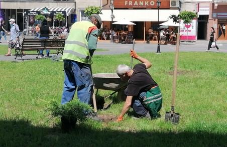 Площа Ринок у Дрогобичі на Львівщині стане зеленішою