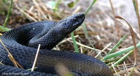 Мешканцям Львівщини радять, як уберегтися від укусів змій
