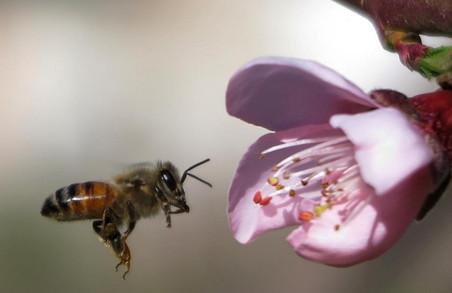 У Буському районі на Львівщині пасічники скаржаться на загибель льотних бджіл