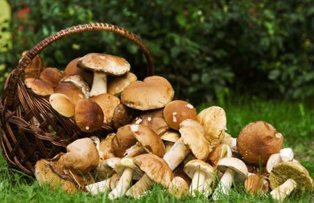 Мешканців Львівщини попереджають, як уникнути отруєння грибами