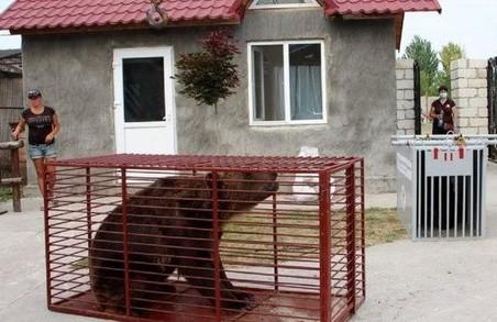 У притулку «Домажир» поселяться ще два ведмеді
