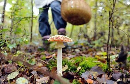 Мешканцям Львівщини розповіли про те, як уникнути отруєння грибами