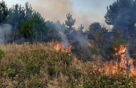В неділю на Львівщині вигоріло понад 2 гектари сухостою
