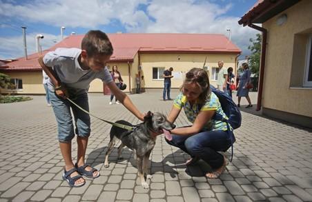 У Львові рахуватимуть безпритульних собак