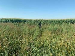 На Львівщині громадський активіст виявив посіви коноплі