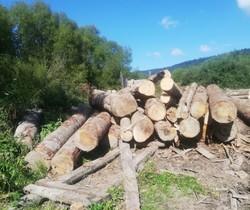 У Старосамбірському районі на Львівщині правоохоронці виявили незаконно зрізані дерева цінних порід