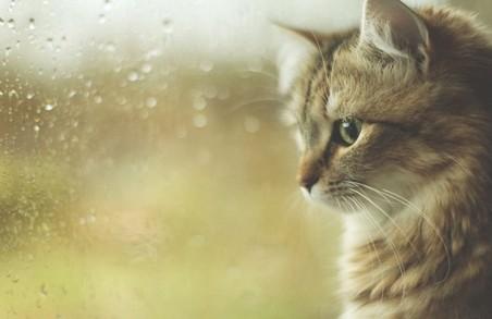На вихідні на Львівщині синоптики заповідають дощі