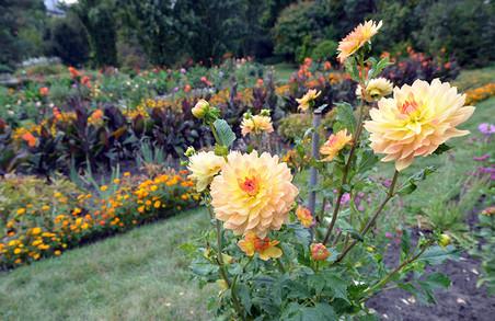 Жоржини, канни, хризантеми: ботанічний сад ЛНУ показав осінню палітру квіток (ФОТО)