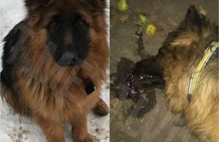 У Львові негідники масово отруюють собак (ФОТО 18+)