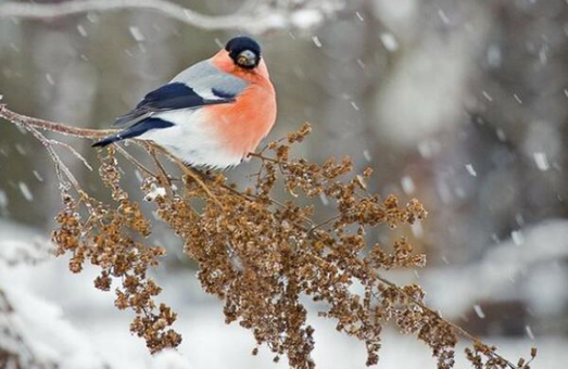 Цьогорічна зими в Україні буде аномальна погода, як для нашої країни