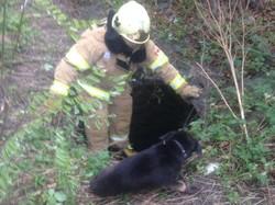 Рятувальники Львівщини сьогодні врятували двох собак