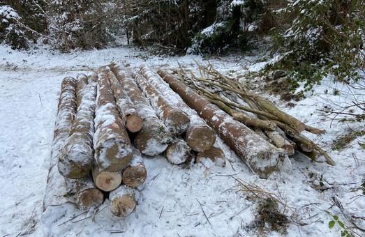Правоохоронці повідомили підозру мешканцю Львівщини, який незаконно вирубував дерева у регіональному ландшафтному парку «Надсяння»