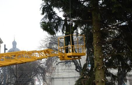 У Львові розпочали демонтаж головної ялинки міста